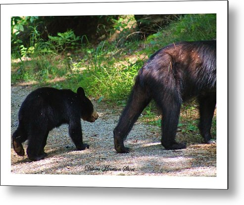 Bears Metal Print featuring the photograph Cub Following Mom by Debora Morrison Short