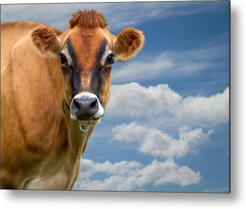 Cow Metal Print featuring the photograph Dairy Cow Bessy by Bob Orsillo