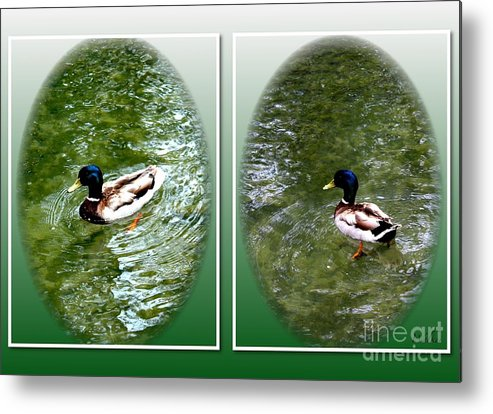 Ducks Metal Print featuring the photograph Double Duck by Schnina Walker