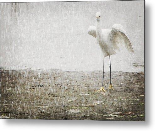Egret Metal Print featuring the photograph Egret In Rain by Heidi Piccerelli
