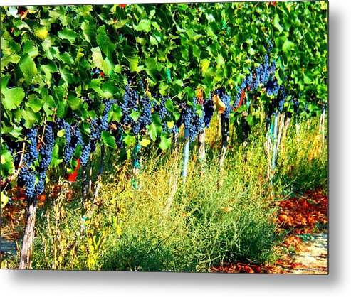Grapes Metal Print featuring the photograph Fruit Of The Vine by Kay Gilley