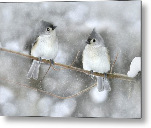 Bird Metal Print featuring the photograph Let It Snow by Lori Deiter