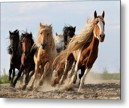 Horse Metal Print featuring the photograph Lucky Six by Adam Wong