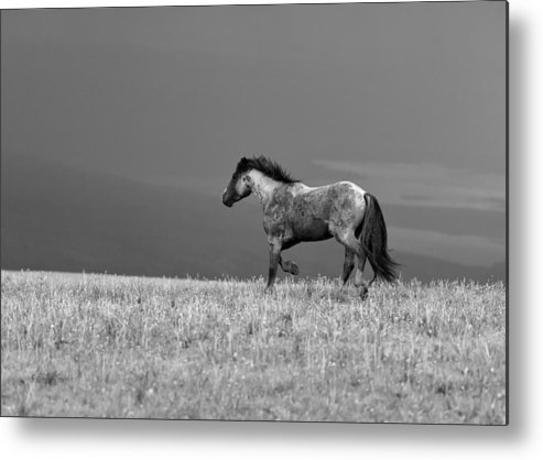 Beautiful Metal Print featuring the photograph Mustang 2 Bw by Roger Snyder
