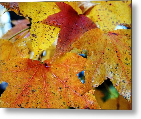 Golden Leaves Metal Print featuring the photograph On A Nice Autumn Day by Ira Shander
