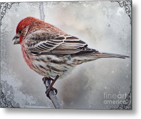 Nature Metal Print featuring the photograph Once Upon A Winters Day Blank Greeting Card by Debbie Portwood