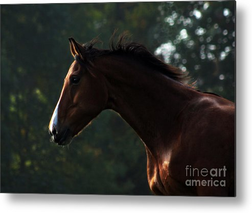 Horse Metal Print featuring the photograph Portrait Of A Horse by Angel Ciesniarska