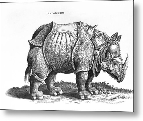 Rhino Metal Print featuring the drawing Rhinoceros No 76 From Historia Animalium By Conrad Gesner by Albrecht Durer