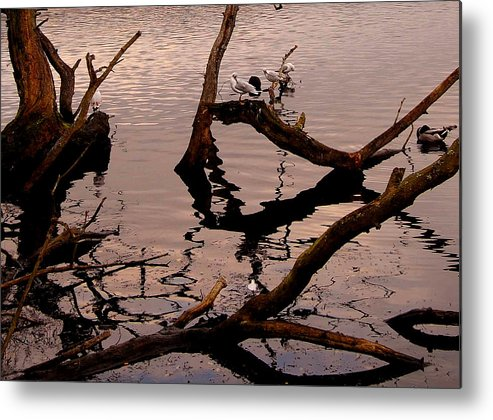 Lake Metal Print featuring the photograph Ripples by John Bailey