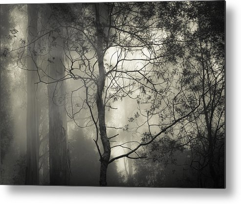 Fog Metal Print featuring the photograph Silent Stirring by Amy Weiss