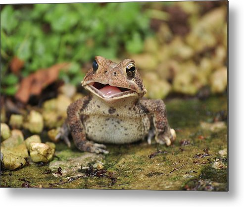 Toad Metal Print featuring the photograph Happy Toad by Theron Clore