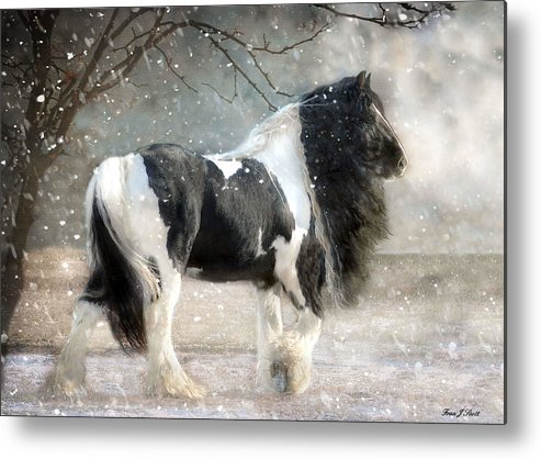 Horse Photographs Metal Print featuring the photograph Solitary by Fran J Scott