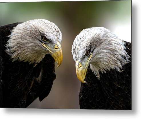 Eagles Metal Print featuring the photograph Soul Mates by Bob Orsillo