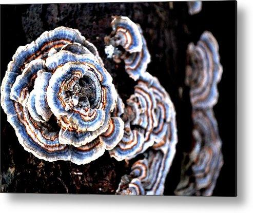 Fungi Metal Print featuring the photograph Surprising II by Carlee Ojeda