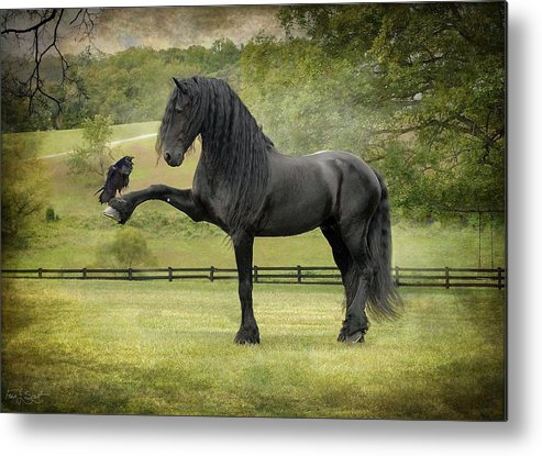 Friesian Horses Metal Print featuring the photograph The Harbinger by Fran J Scott