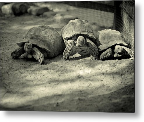 Three Metal Print featuring the photograph Three Musketeers by Viola Jasko