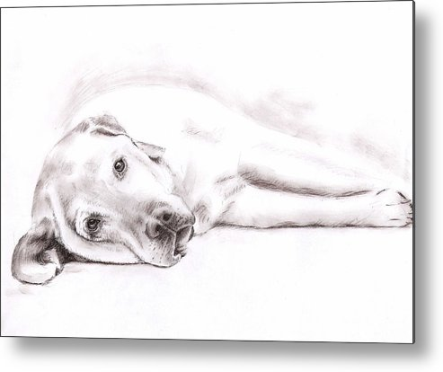 Dog Metal Print featuring the drawing Tired Labrador by Nicole Zeug