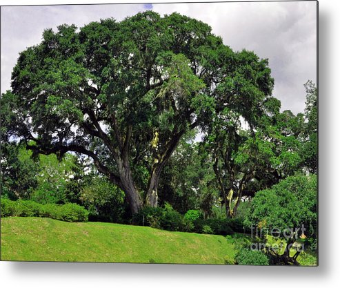 Tree By The River Metal Print featuring the photograph Tree By The River by Lydia Holly