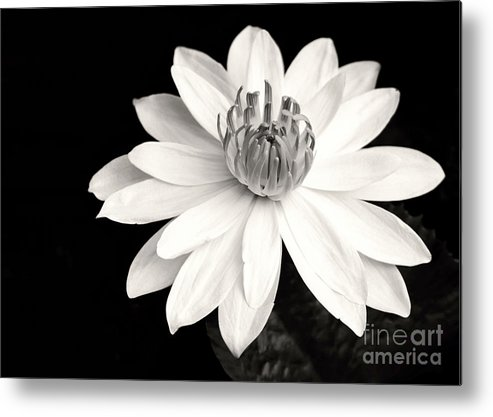 Landscape Metal Print featuring the photograph Water Lily Ballerina by Sabrina L Ryan