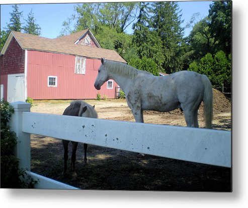 Metal Print featuring the photograph White Horse by Pepsi Freund