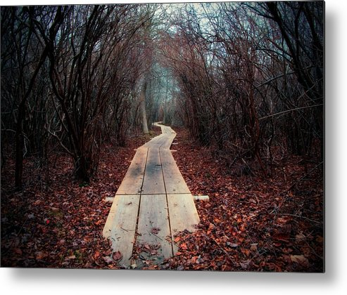 Cape Cod Metal Print featuring the photograph Winter Path by David DeCenzo