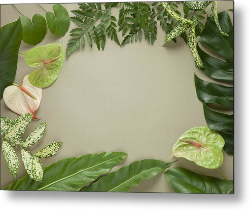 Horizontal Metal Print featuring the photograph Leaves Frame by sozaijiten/Datacraft