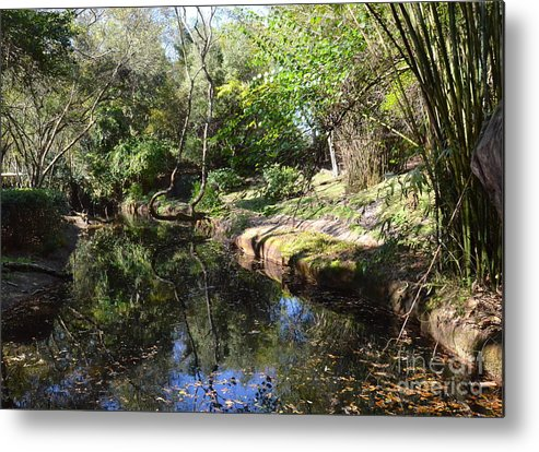 River Metal Print featuring the photograph A River In The Wilderness by Carol Bradley