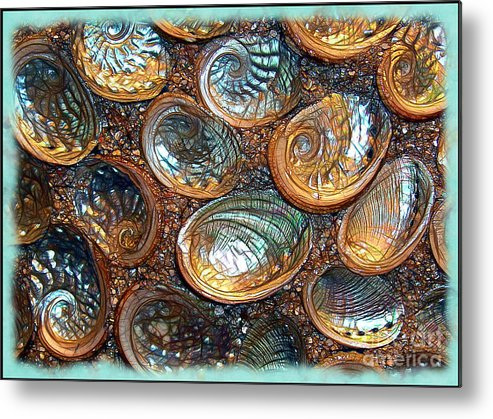 Abalones Metal Print featuring the photograph Abalones by Judi Bagwell