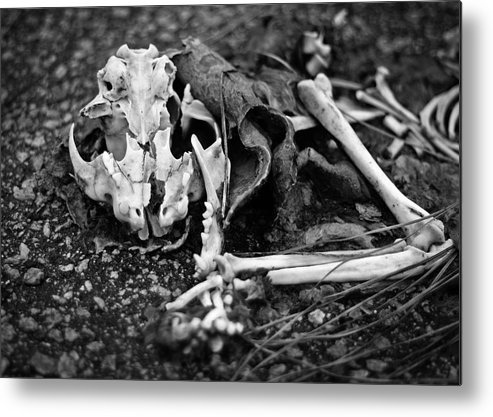 Skeleton Metal Print featuring the photograph Bad Kitty by Jessica Yakamna