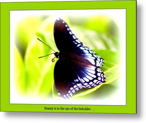 Beauty Metal Print featuring the photograph Beauty by Travis Truelove