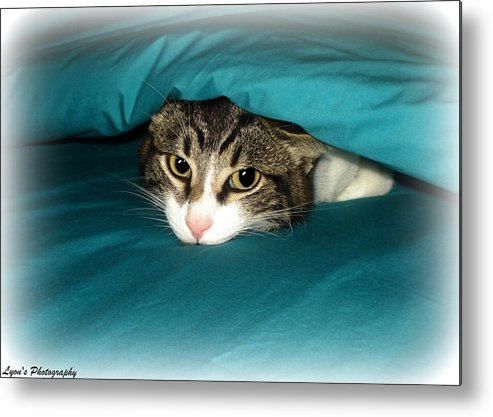 Cat Metal Print featuring the photograph Bed Time by Desiree Lyon