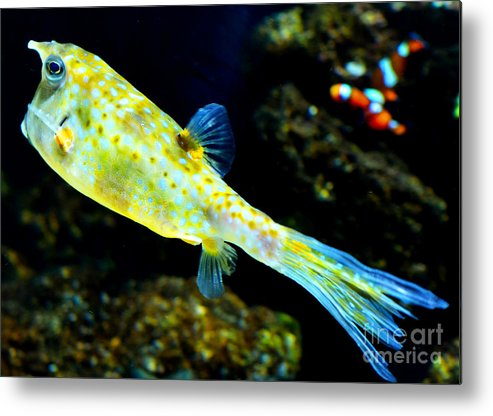 Fish Metal Print featuring the photograph Exotic Fish by Pravine Chester