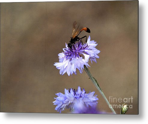 Bug Metal Print featuring the photograph Flower Meal by Tamera James