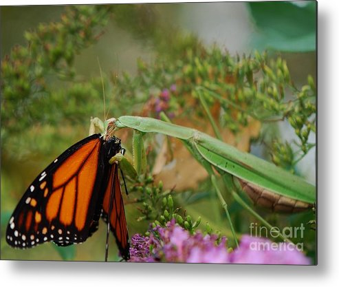 Monarch Butterfly Metal Print featuring the photograph Food For The Soul by Joy Bradley