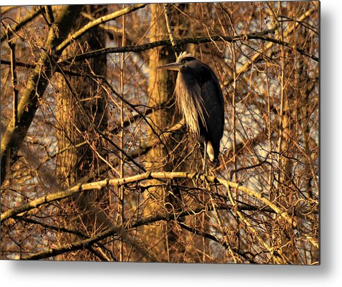 Ladner Metal Print featuring the photograph Great Blue Heron At Dusk by Lawrence Christopher