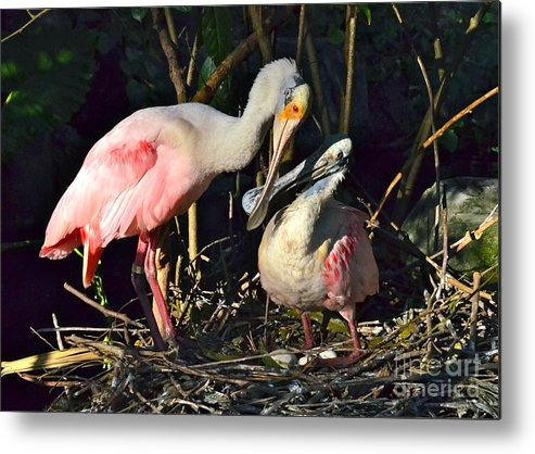 Spoonbill Metal Print featuring the photograph Love Is Grand by Carol Bradley