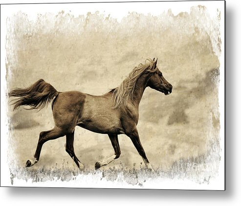Equine Art Metal Print featuring the photograph Prancer by Patty Hallman