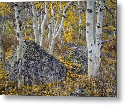 Nature Metal Print featuring the photograph Scattered Gold by Idaho Scenic Images Linda Lantzy