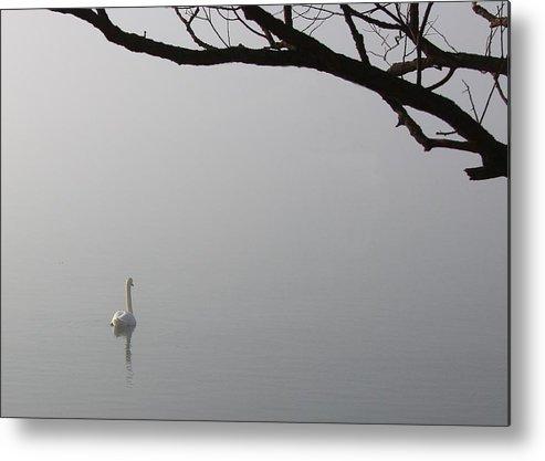 Swan Metal Print featuring the photograph Swan Lake by Davandra Cribbie