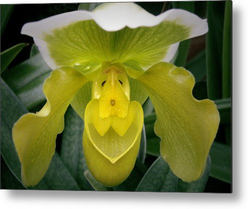 Orchid Metal Print featuring the photograph The Yellow Orchid by Nancy Griswold