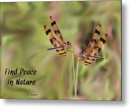 Dragonfly Metal Print featuring the photograph Twins by Rosalie Scanlon