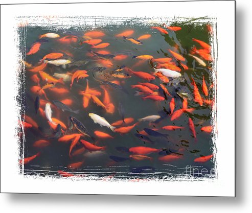 Koi Metal Print featuring the photograph Koi Pond With Framing by Carol Groenen