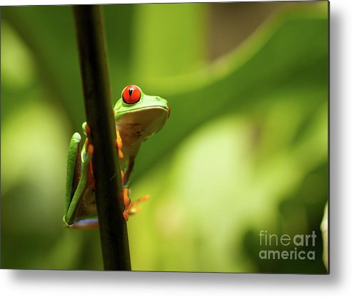 Costa Metal Print featuring the photograph Hanging Out by David Shaffer