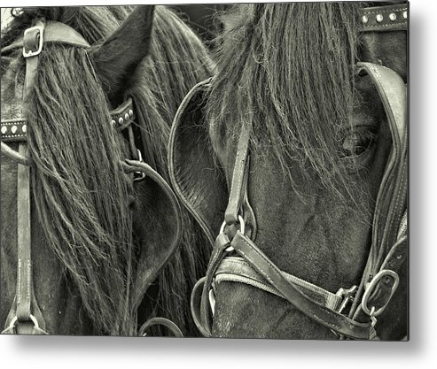 Horse Metal Print featuring the photograph Teamwork Together by JAMART Photography