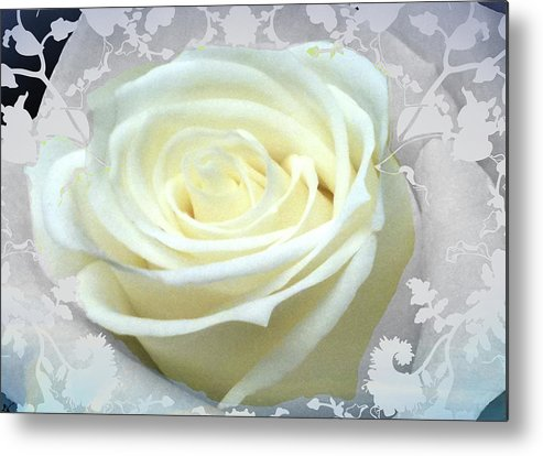 Blue Night Rose Metal Print featuring the photograph Wedding Rose Collection by Debra   Vatalaro