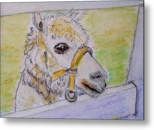 Baby Metal Print featuring the drawing Baby Llama by Lessandra Grimley