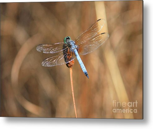 Dragonfly Metal Print featuring the photograph Beautiful Broken Wing by Carol Groenen