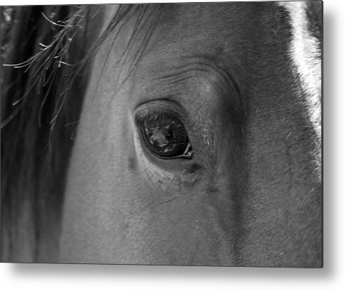 Horse Metal Print featuring the photograph Beauty Is In The Eye by Heather S Huston