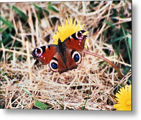 Ireland Metal Print featuring the photograph Butterfly In Ireland by Ellen Lerner ODonnell