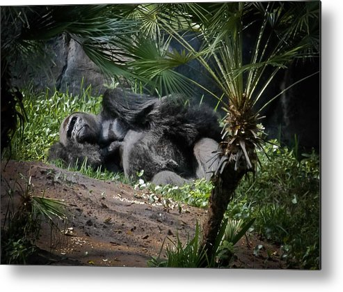 Gorilla Metal Print featuring the digital art Captivity Is Heartbreaking by DigiArt Diaries by Vicky B Fuller